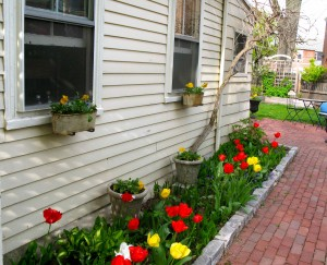 Container plants are a great way to supplement color in tulip beds.