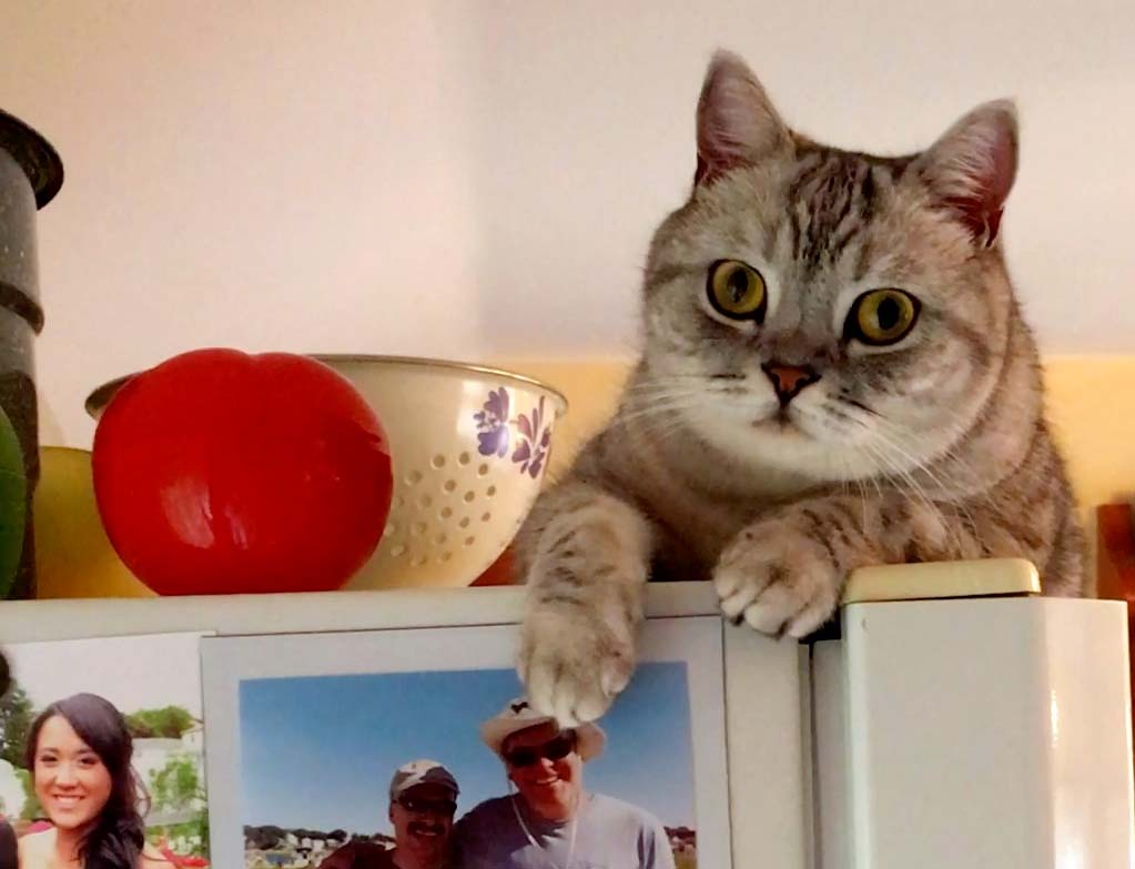 Mookie on top of the fridge.
