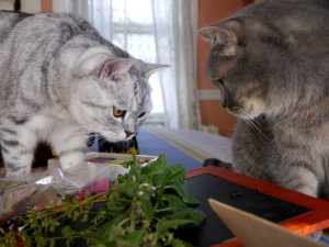 Two cats sniff some herbs.