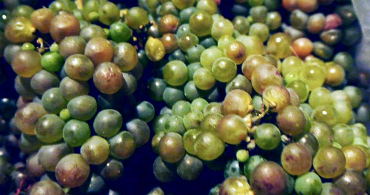 Making Wine Without Chemicals