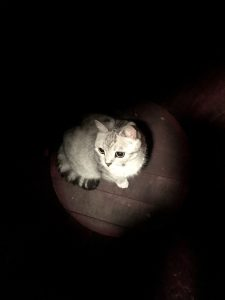 Mookie, the cat at the bottom of a wine barrel.