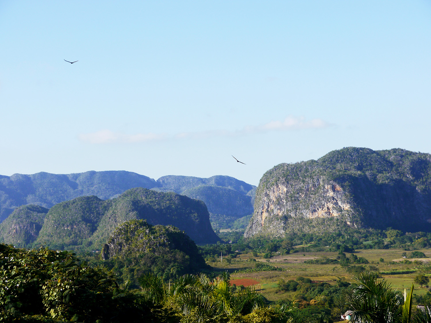 A view of the valley with birds flying.